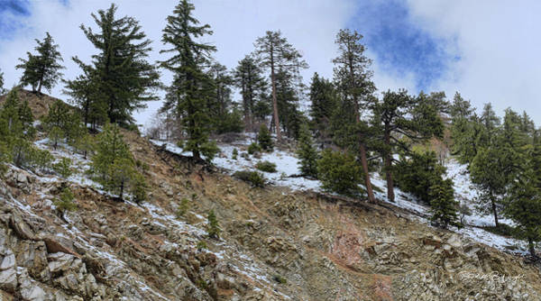 Photograph - Snow And Rocks And Pines by Paulette B Wright