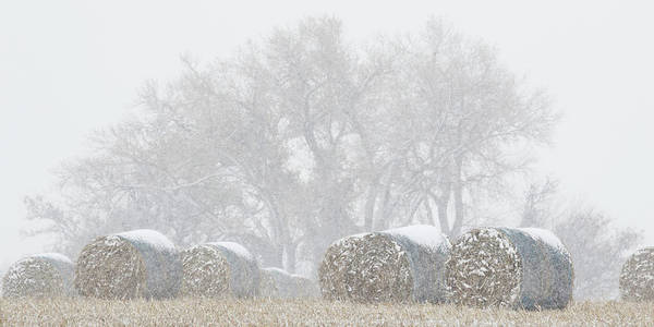 Photograph - Snow And Round Bales 02 by Rob Graham