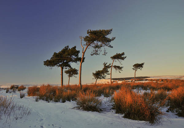 Covering Photograph - Snow And Trees At Sunset by Terry Roberts Photography