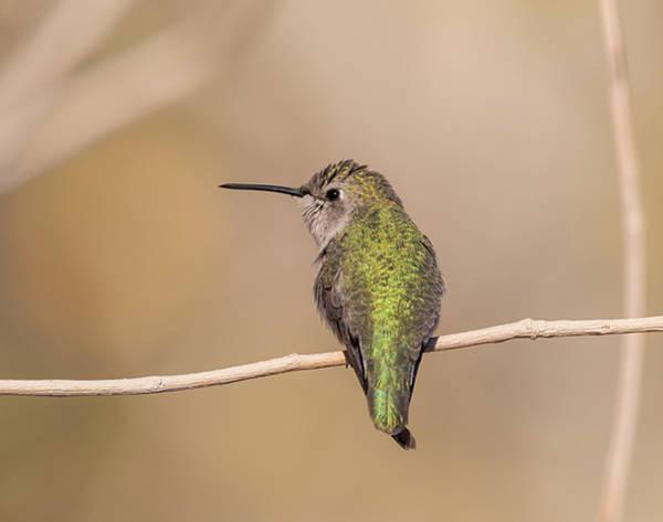 Photograph - Snow Bird by Loree Johnson