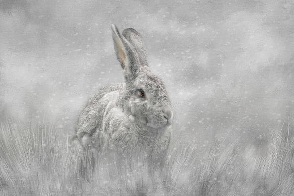 Photograph - Snow Bunny by Kelley Parker