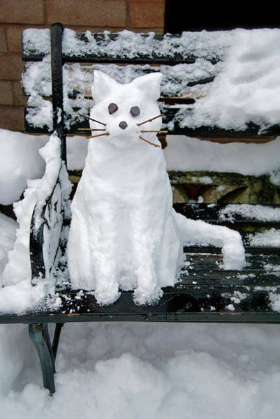 Manchester Photograph - Snow Cat by Michelle Mcmahon