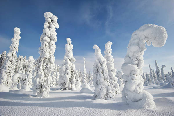 Covering Photograph - Snow Covered Landscape, Finland by Ben Cranke