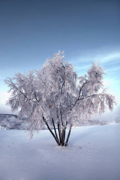 Photograph - Snow Covered Tree In The Yukon River by Jonathan Tucker