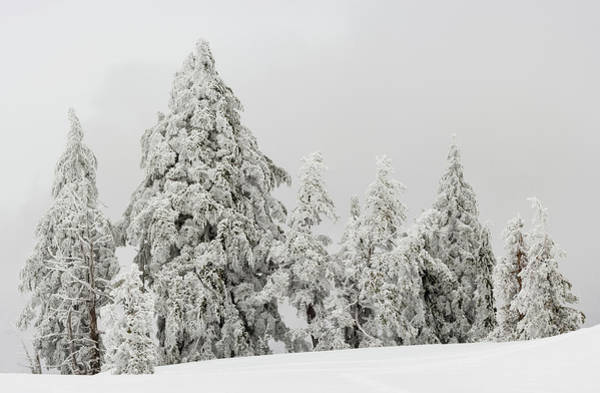 Wall Art - Photograph - Snow Covered Trees, Crater Lake by Panoramic Images