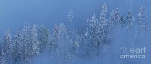 Photograph - Snow Covered Trees In Fog Yellowstone National Park Wyoming by Dave Welling