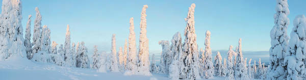 Wall Art - Photograph - Snow Covered Trees, Riisitunturi by Panoramic Images