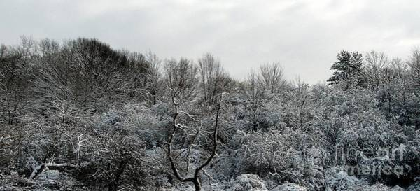 Photograph - Snow Covered Trees by Rose Santuci-Sofranko