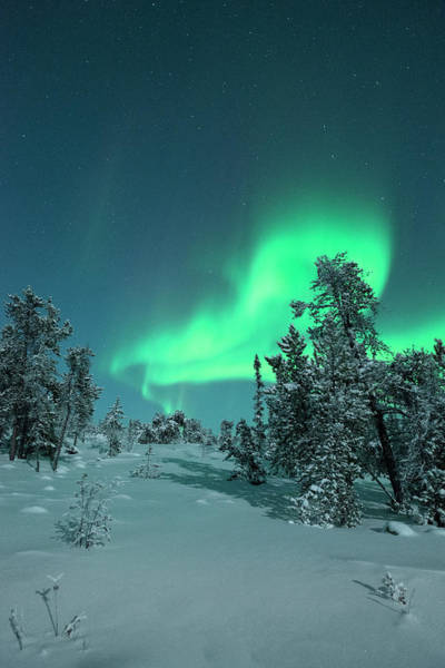 Yellowknife Wall Art - Photograph - Snow Covered Trees With Moonlight And by Michael Ericsson