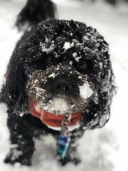Digital Art - Snow Dog 11 by Cindy Greenstein