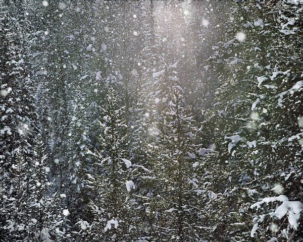 Flake Photograph - Snow Flakes by Leland D Howard