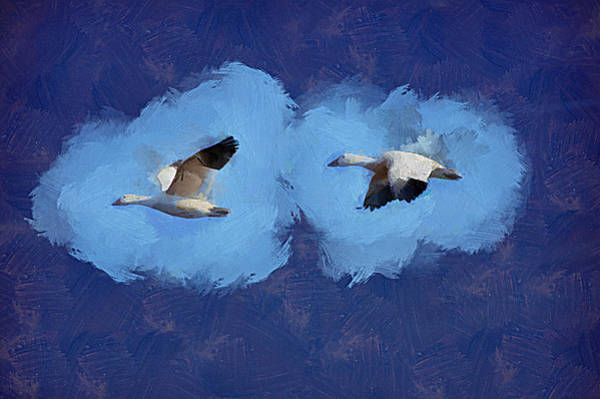 Mixed Media - Snow Geese by Trish Tritz