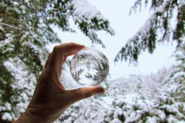 Photograph - Snow Globe by Peggy Collins