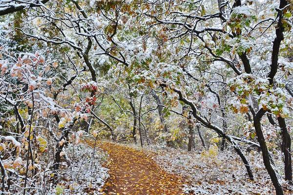 Photograph - Snow Greets Autumn by Diane Alexander