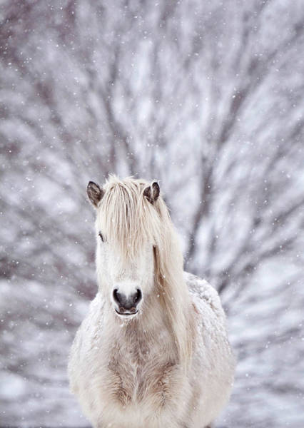 Selective Focus Wall Art - Photograph - Snow Horse by Gigja Einarsdottir