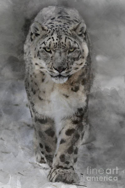 Photograph - Snow Leopard II by Brad Allen Fine Art
