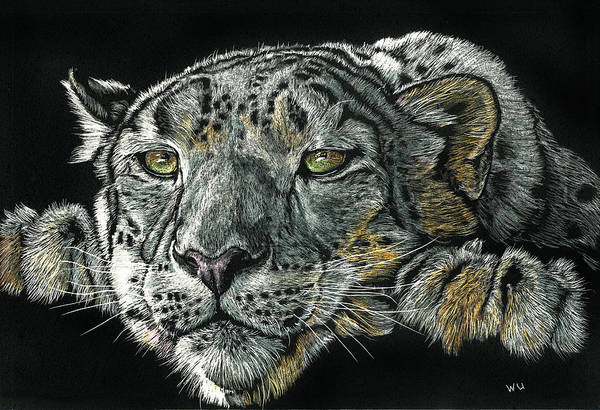 Drawing - Snow Leopard by William Underwood
