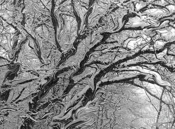 Photograph - Snow Melt by Rosanne Licciardi