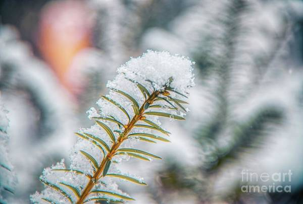 Photograph - Snow Needle by Jim Lepard