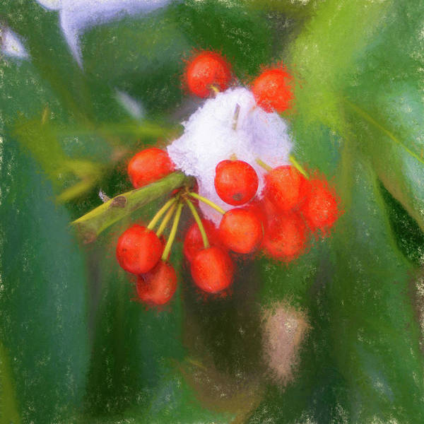 Digital Art - Snow On Red Berries by Jason Fink
