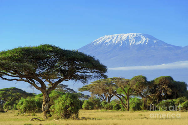 Amboseli Wall Art - Photograph - Snow On Top Of Mount Kilimanjaro In by Volodymyr Burdiak