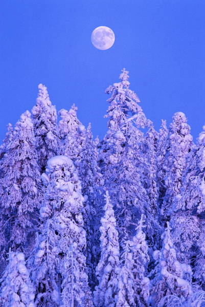 Covering Photograph - Snow On Winter Forest, Full-moon Above by Hans Strand