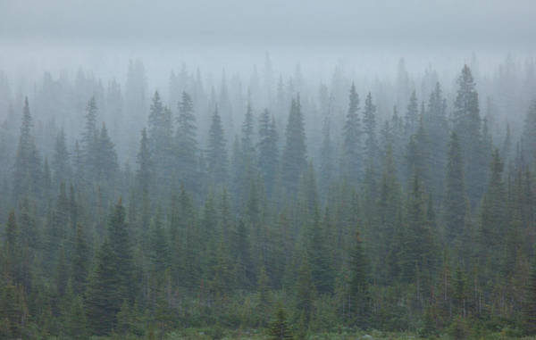 Art In Canada Photograph - Snow Storm In The Forests Of Jasper by Mint Images/ Art Wolfe