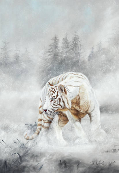 Pastel - Snow Tiger by Peter Williams