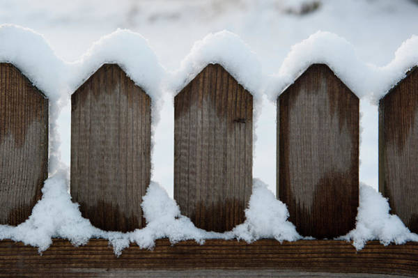 Photograph - Snow Topped Spikes by Helen Northcott