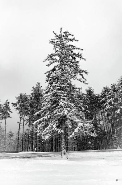 Photograph - Snow Tree by Tom Romeo