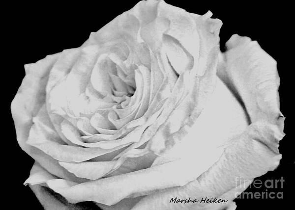 Wall Art - Photograph - Snow White Macro Rose by Marsha Heiken