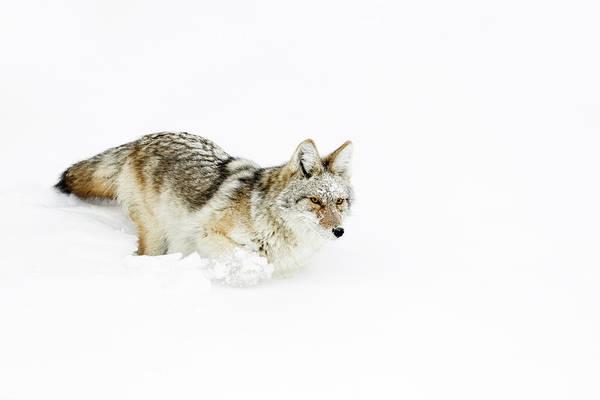 Wall Art - Photograph - Snowbound by Ann Skelton