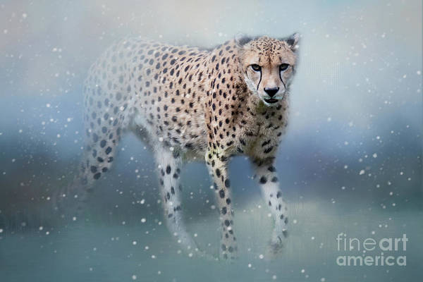 Photograph - Snowbound Cheetah by Ed Taylor