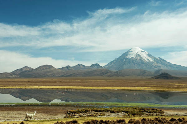 Wall Art - Photograph - Snowcapped Volcano Sajama by Anthony Asael