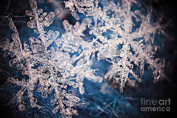 Wall Art - Photograph - Snowflake Crystal Natural Snow by Kichigin