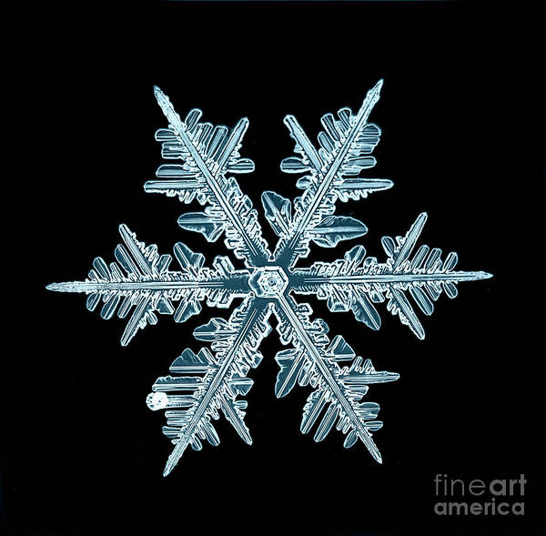 Wall Art - Photograph - Snowflake Isolated Natural Crystal by Kichigin