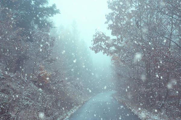 Photograph - Snowing In Misty Woods by Jenny Rainbow