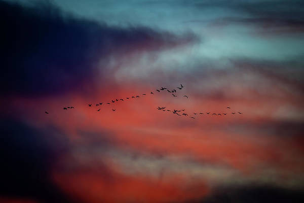 Photograph - Snows In The Sunset by Jeff Phillippi