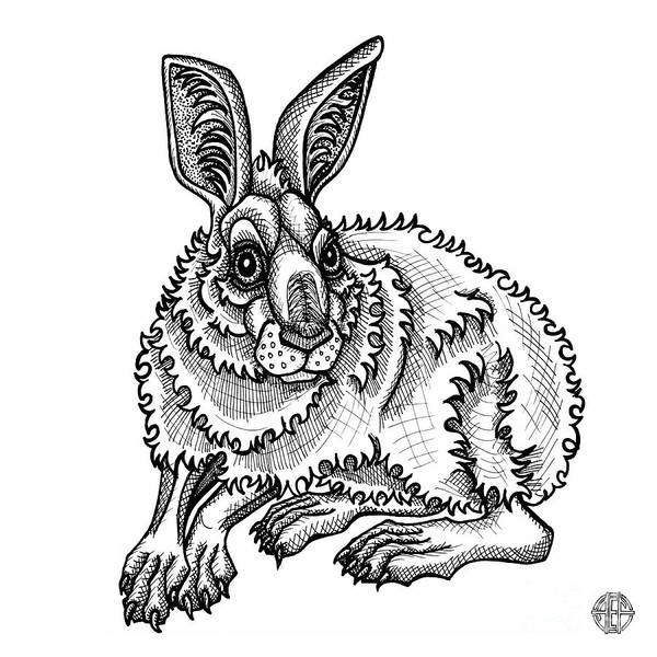 Drawing - Snowshoe Hare by Amy E Fraser