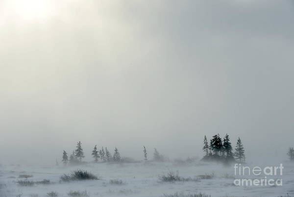 Wall Art - Photograph - Snowstorm In Tundra Landscape With by Sergey Uryadnikov