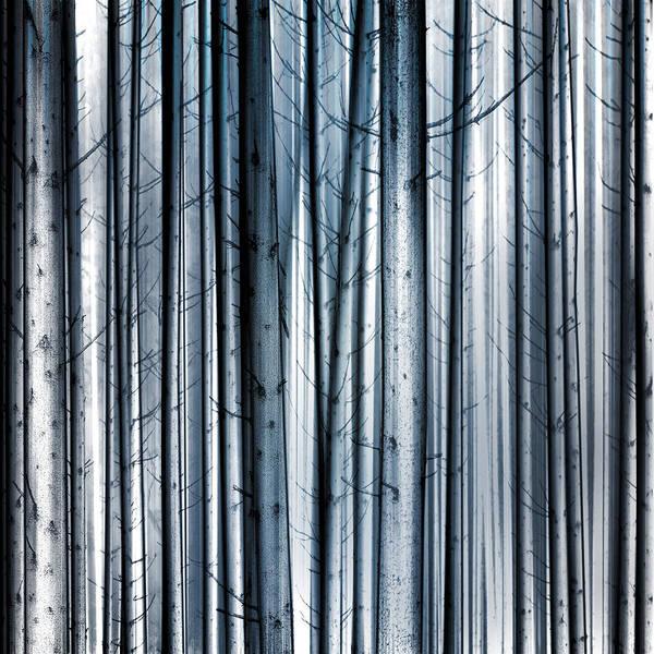Wall Art - Digital Art - Snowy Birch by Tim Palmer