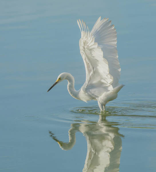 Photograph - Snowy Egret 5983-081119 by Tam Ryan