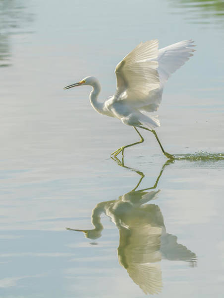 Photograph - Snowy Egret 6013-081119 by Tam Ryan