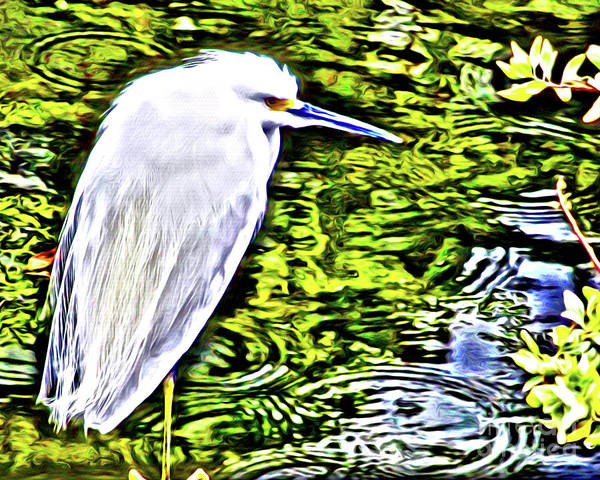 Wall Art - Photograph - Snowy Egret And Raindrops by Jerome Stumphauzer