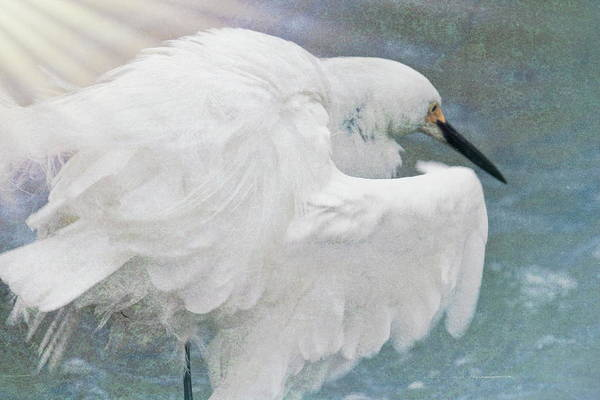 Wall Art - Photograph - Snowy Egret Art  by Geraldine Scull