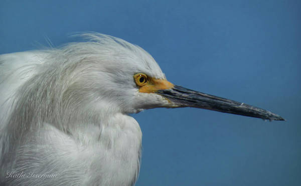 Wall Art - Photograph - Snowy Egret In Portrait by Kathi Isserman