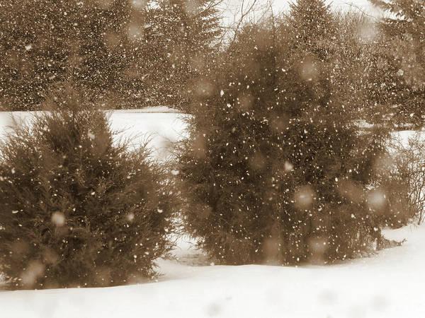 Photograph - Snowy January by Cris Fulton