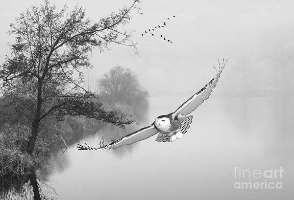 Wingspan Photograph - Snowy Owl Morning Bw by Laura D Young