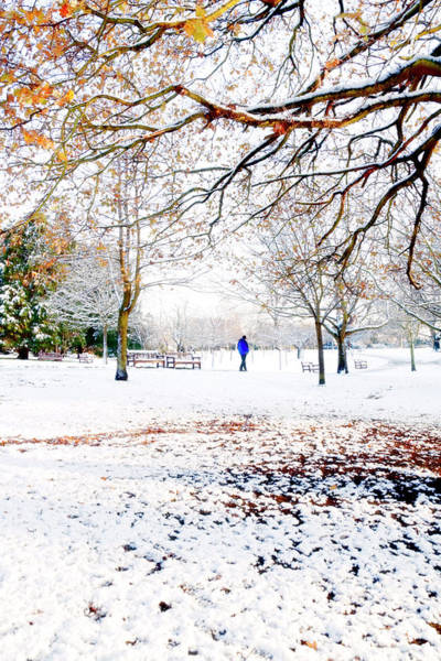 Bleached Photograph - Snowy Park With Trees by Whitemay