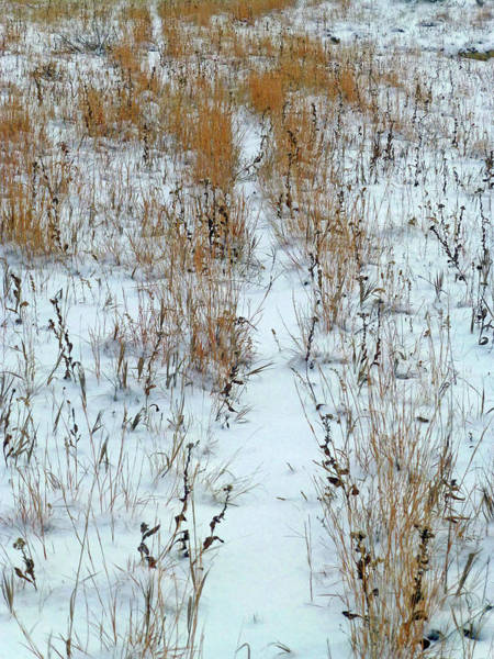 Photograph - Snowy Path by Cris Fulton